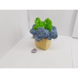 Кашпо со стабилизированным мхом Бетонные кашпо со стабилизированным мхом Стабилизированный мох в бетонном горшке