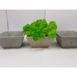 Moss pots Pots with moss Concrete pot with moss Concrete pot with stabilized moss Concrete planter with moss
