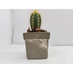 Cache-pot Planter Plant pot Flower plant pot Flower cache-pot