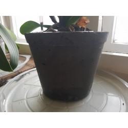 Succulent Planter Handmade Plant Pot Planter Flower Pot Cactus Planter